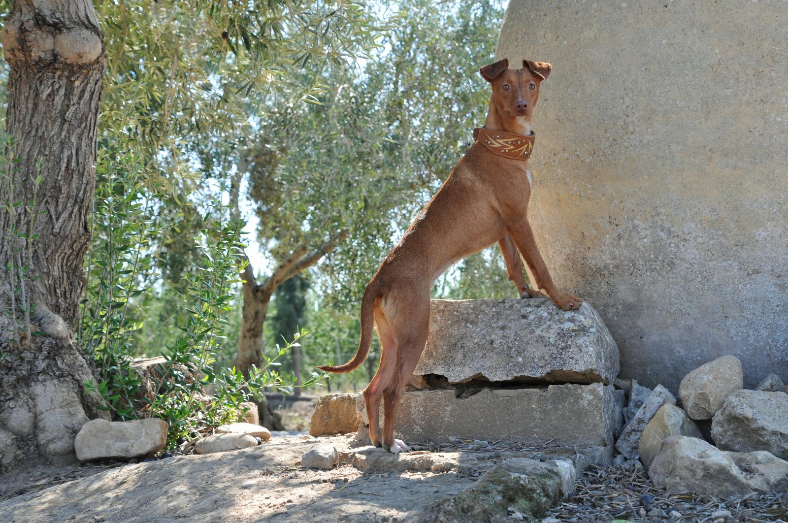 Bild11 Prada Hoffnungsvolle Tierherzen
