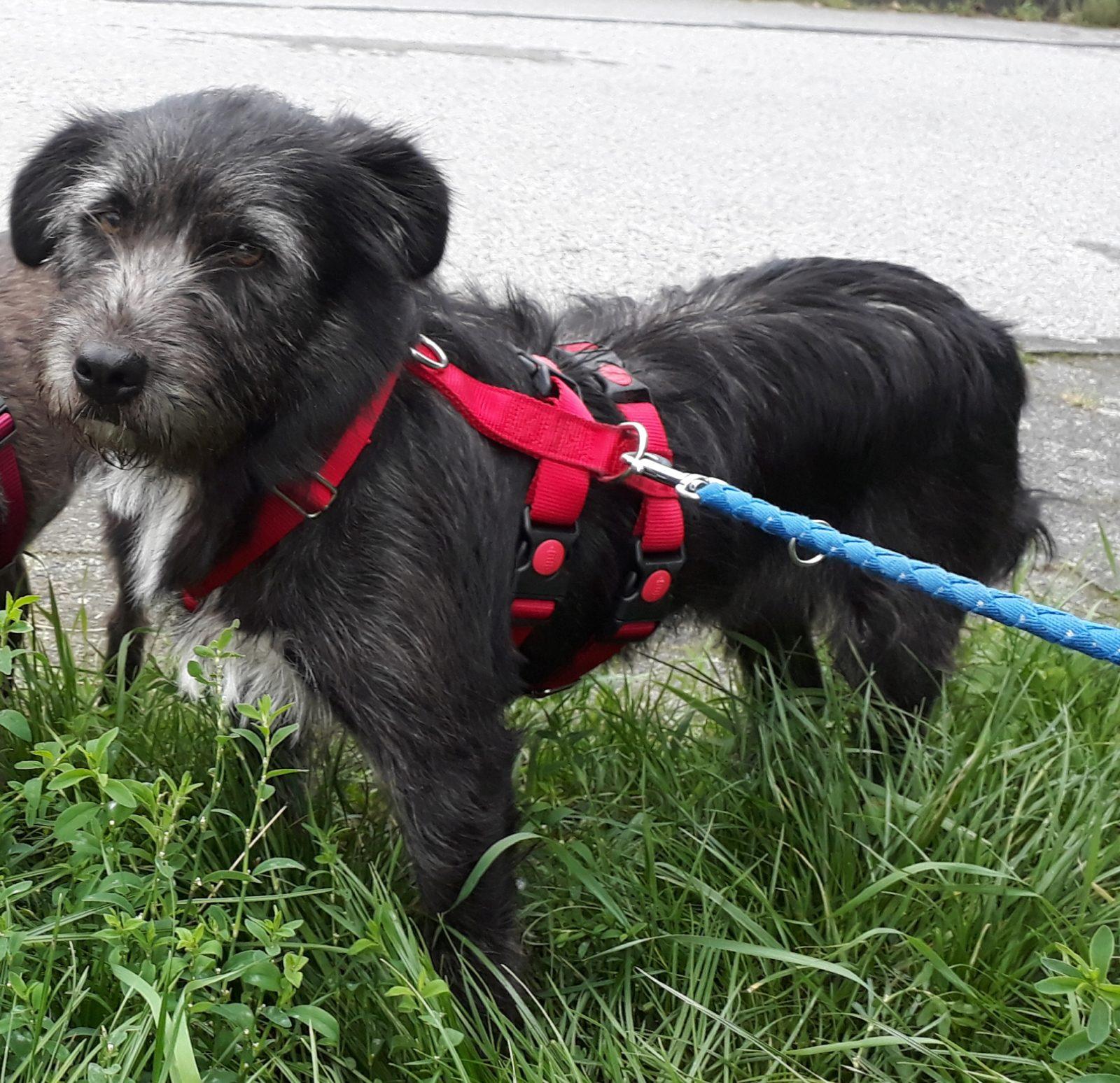 Foto3 Penelope Aktionsgemeinschaft für Tiere